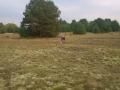 pobór próbek gleby i gruntu